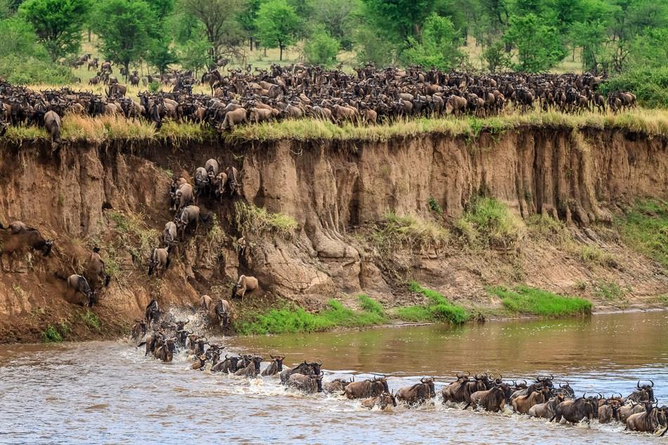 3 Days Wildebeest Migration Safari