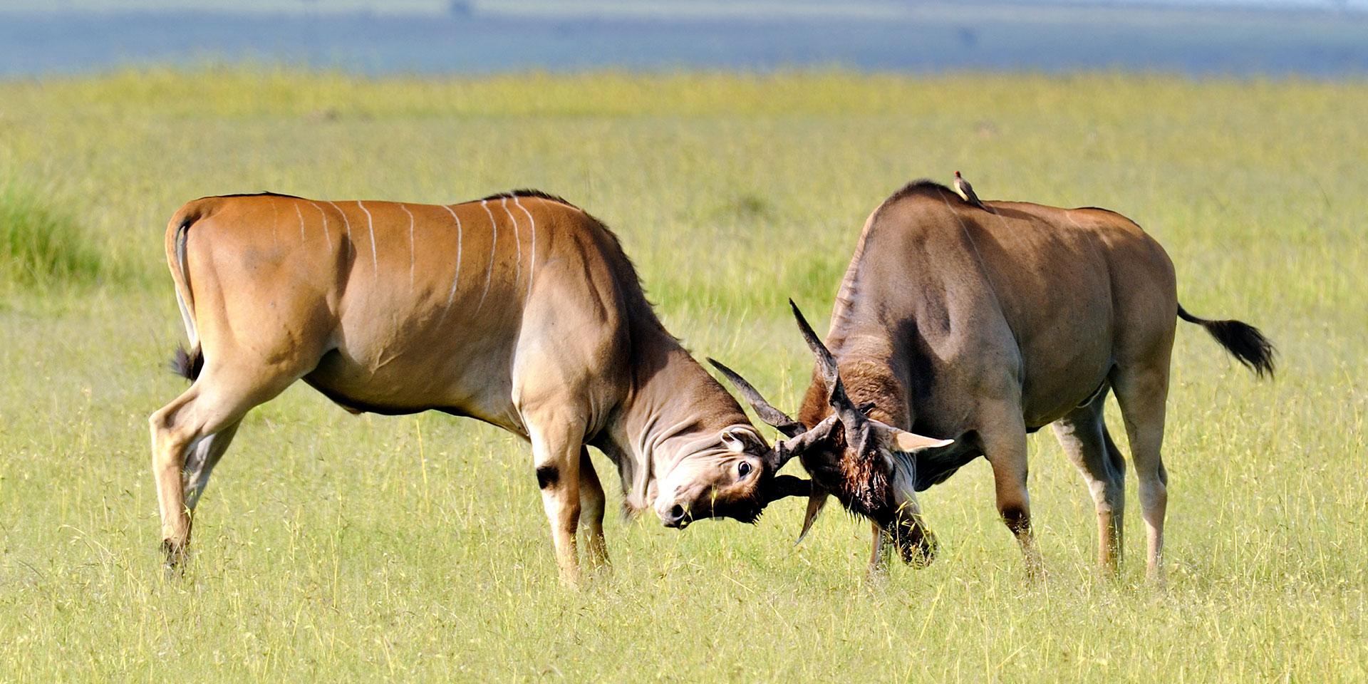 7 days Masai Mara safari
